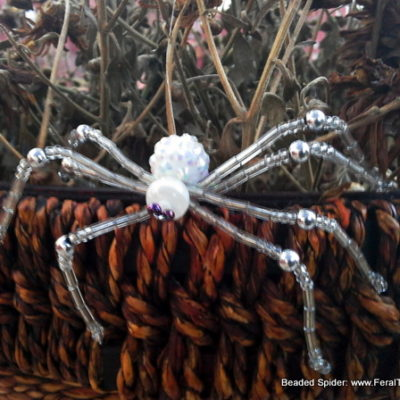 50 Questions Day and a Beaded Spider