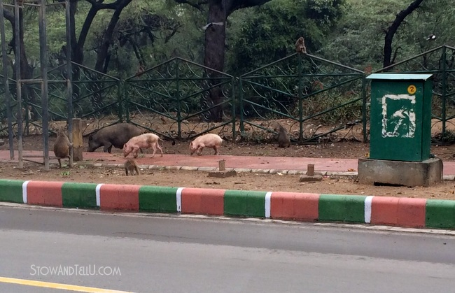 wild-animals-india