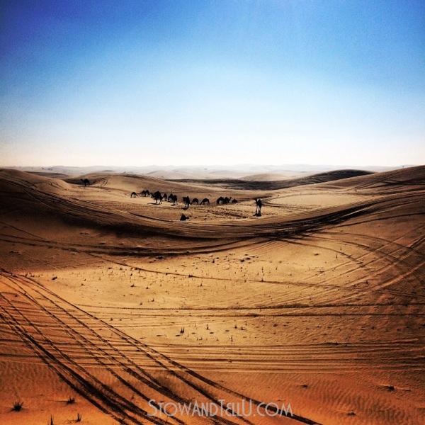 postcards-camel-bedouin-arabian-desert