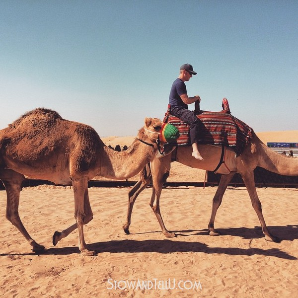 postcards-from-arabian-desert-camel-ride-https://stowandtellu.com