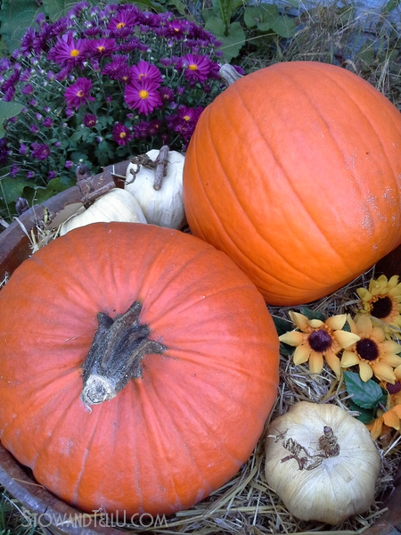 fall-display-barrel-pumpkins