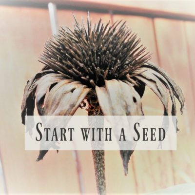Start with a Seed Plant Growing Series (part 1): Intro