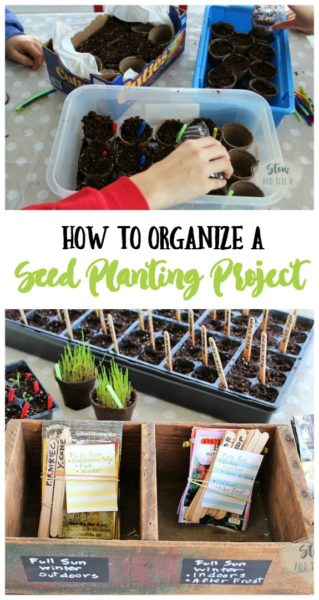 How to organize a seed planting-sowing-project | Stowandtellu.com