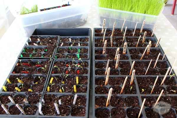 Organize successful seed planting project | Stowandtellu.com