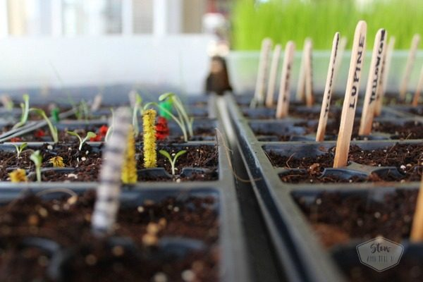 start-with-seed-seedling-success
