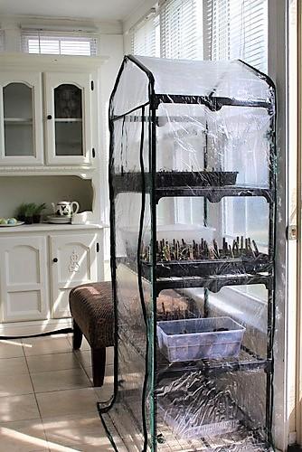 inexpensive-indoor-green-house