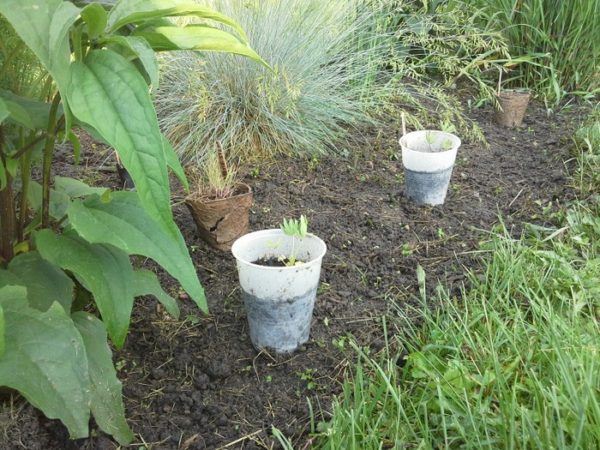 DIY Garden from Seed: Seedling tips for transplanting and cold hardening seedlings outdoors | stowandtellu.com