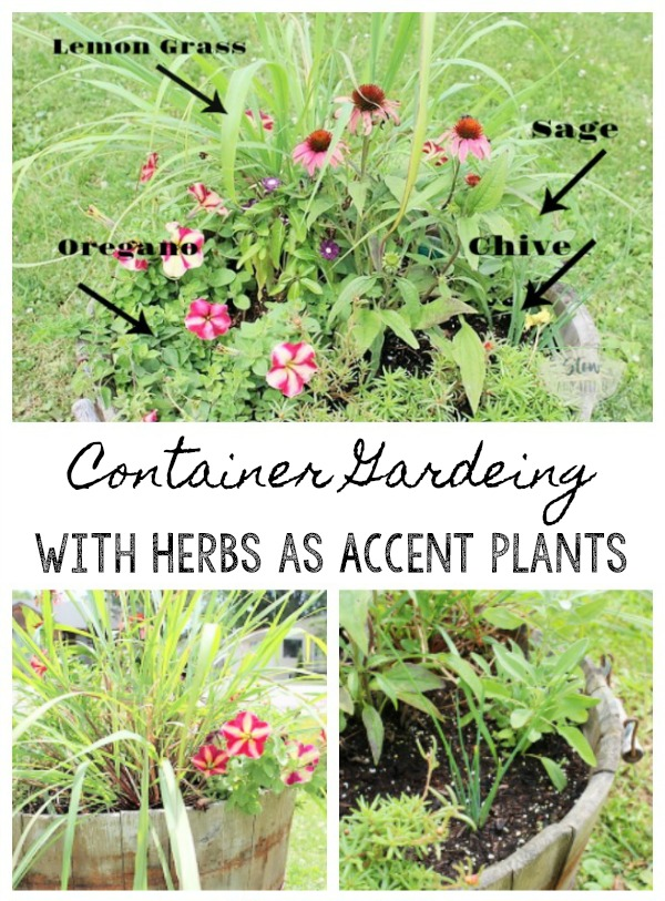 Container Gardening With Flowers And Herbs As Accent Plants