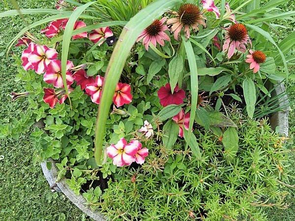 Herbs and flowers combined in a container garden | stownadtellu.com