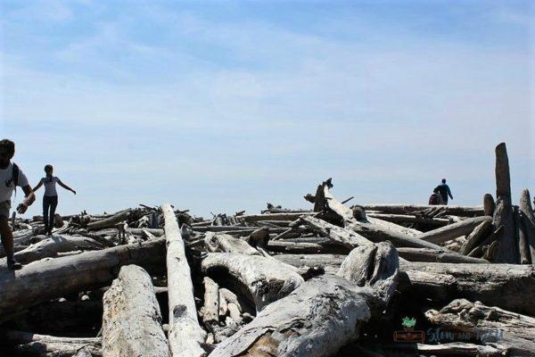 climbing-driftwood-ruby-beach