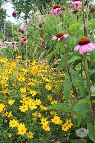 6 tips for starting a diy flower garden |moonbeam-coreopsis-echinacea | stowandtellu.com