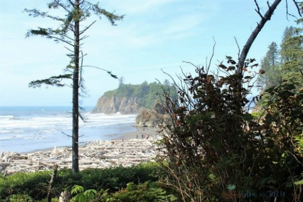 sea-stack-ruby-beach-washington-coast