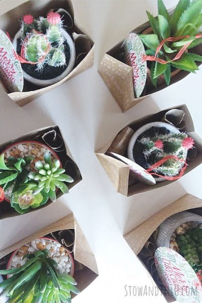 Bulk Gift Idea - Potted Succulents