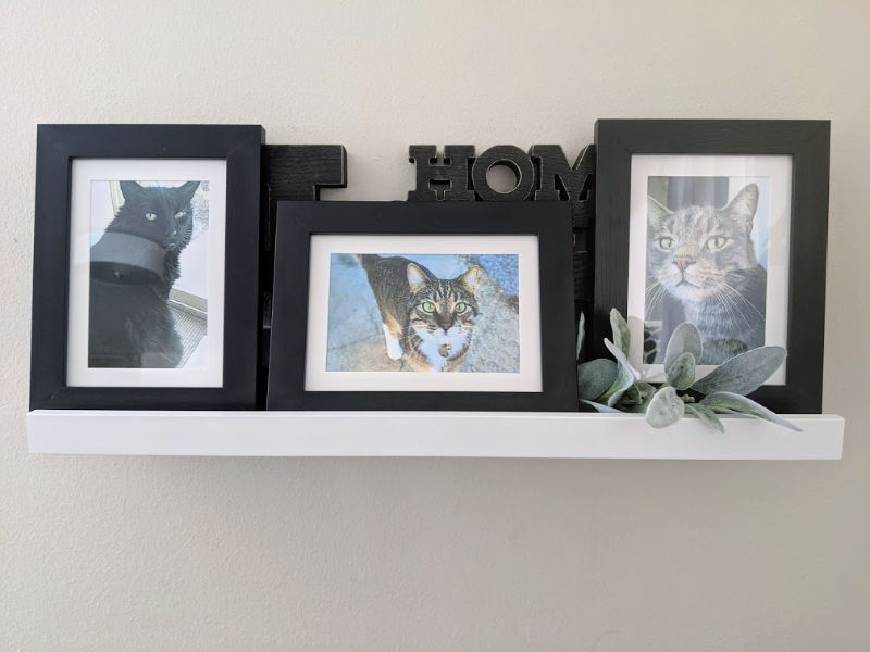 Insert a love letter to pet behind a framed pet photo