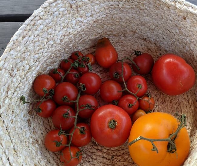 What to do with Extra Tomatoes; how to use up tomatoes